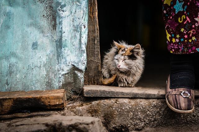 cat-1209904_640