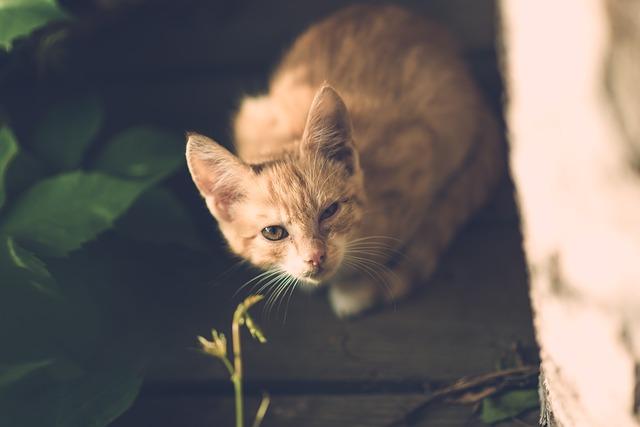 cat-1593059_640
